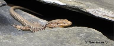 abri-reptile-10