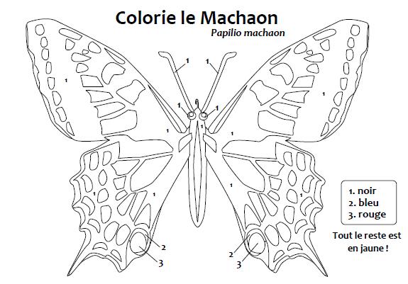 machaon