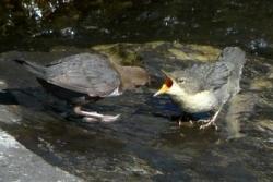 oiseaux-01
