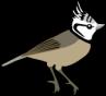 oiseaux-8